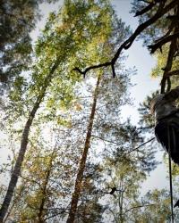 Бортевое пчеловодство башкир деревни Новомунасипово Бурзянского района Республики Башкортостан