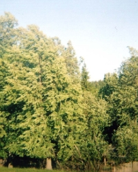 Летние моления закамских удмуртов